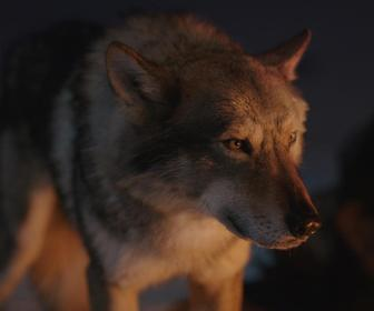 Lovable dogs get turned into ice age wolves for new film Alpha