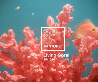 The Pantone Colour of the Year 2019 is 'Living Coral'